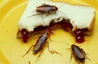 Избавьтесь от всех грязных тараканов в вашем доме