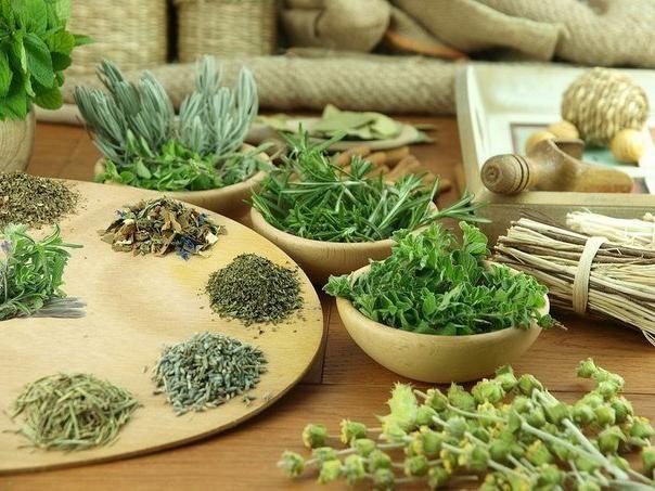 Подборка ценнейших противопаразитарных растений